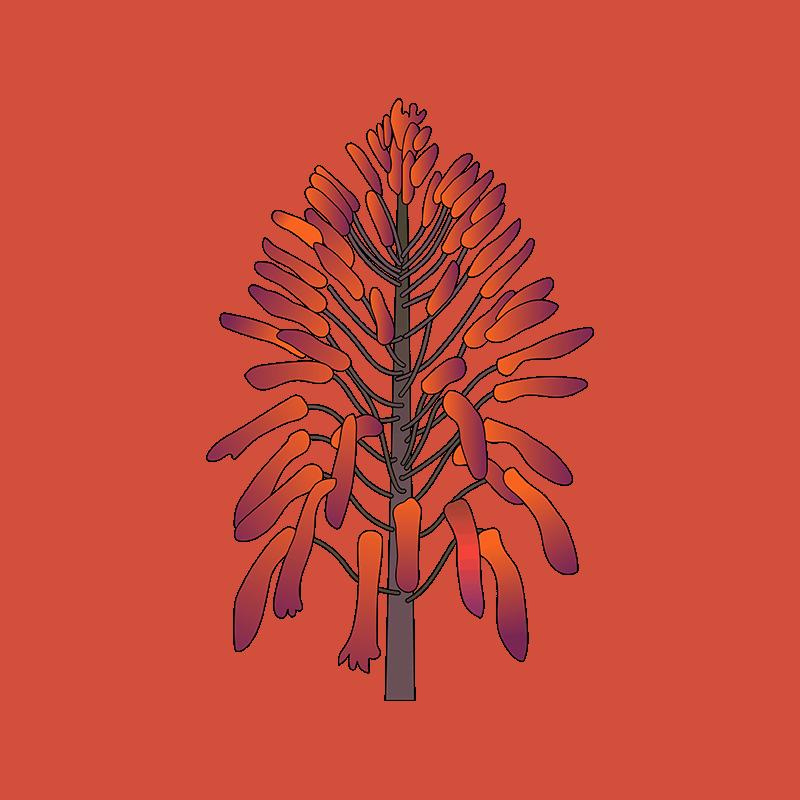 aloe vera orange flower