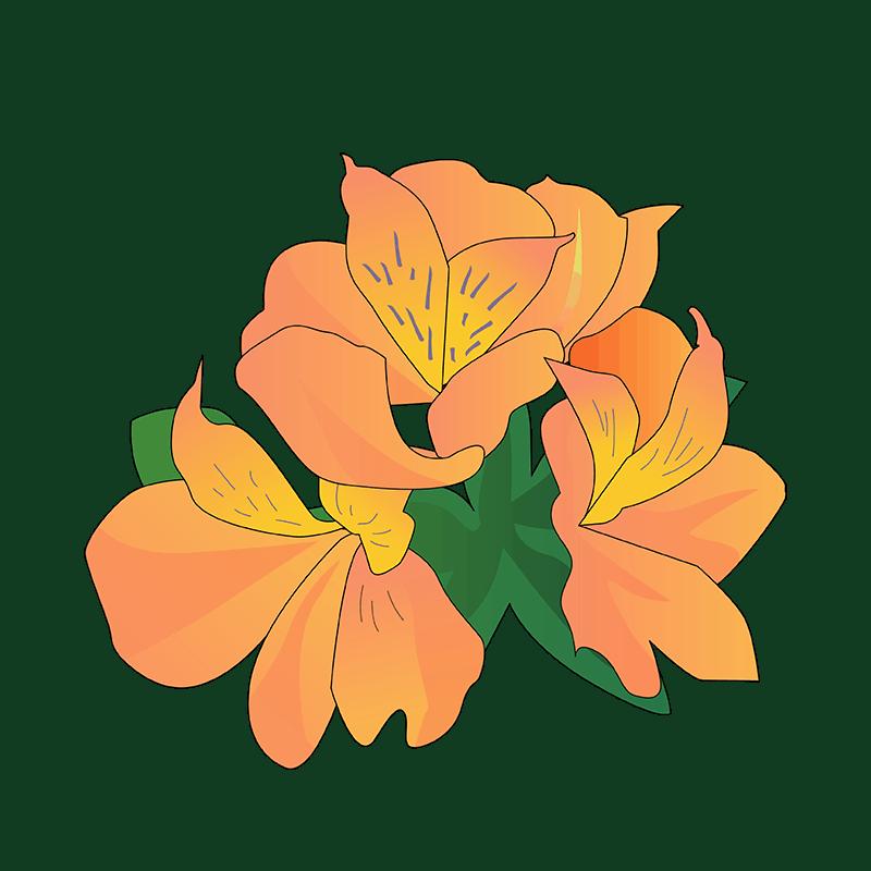 Alstroemeria orange flower