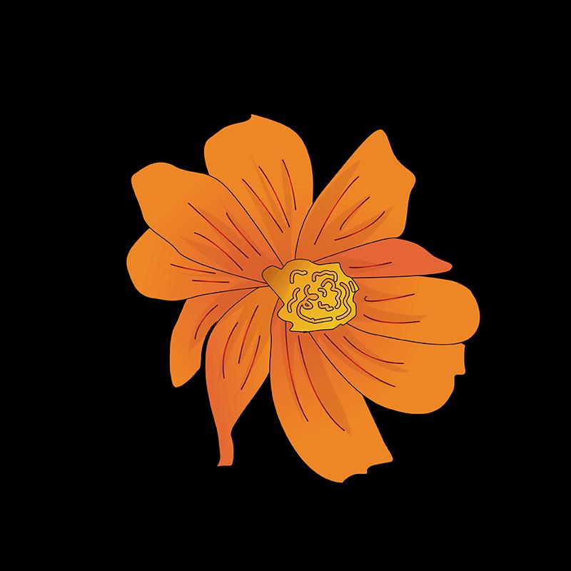 Crown Imperial flower