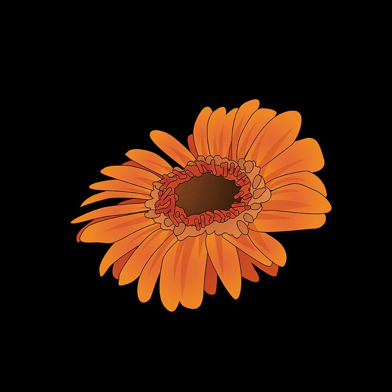 Orange Columbine flower