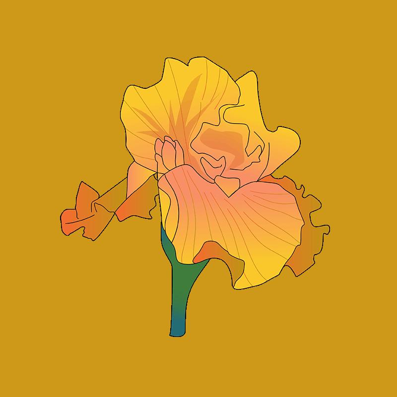 Orange Coneflower