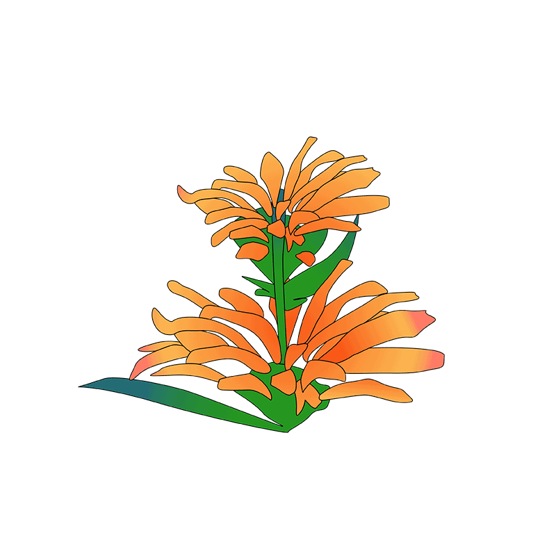 Orange Wallflower