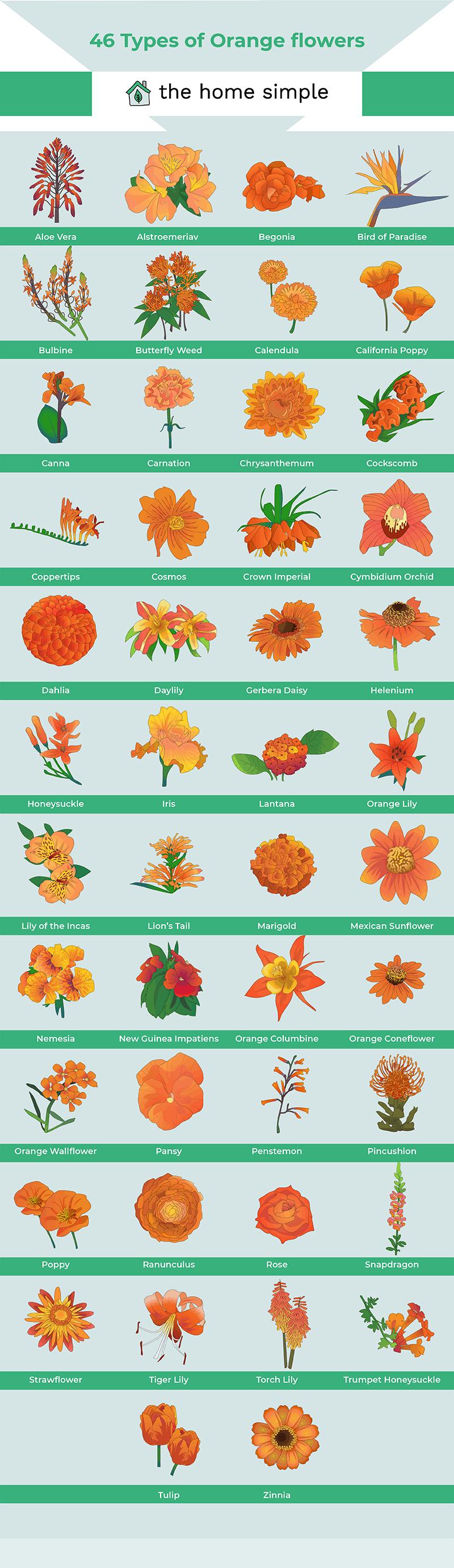 types of orange flowers