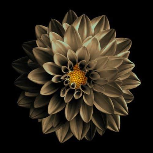 types of brown flowers